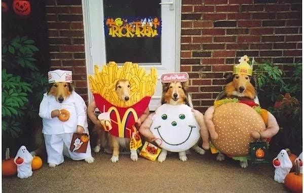 Howl-o-ween Canine Carnival, 30 October | Event in Highland Heights | AllEvents.in