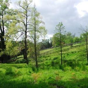 Wetland Wednesdays