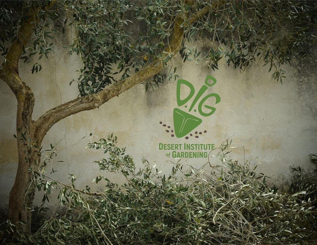 DIG ONLINE: Tree Selection and Planting, 2 December | Event in Phoenix | AllEvents.in