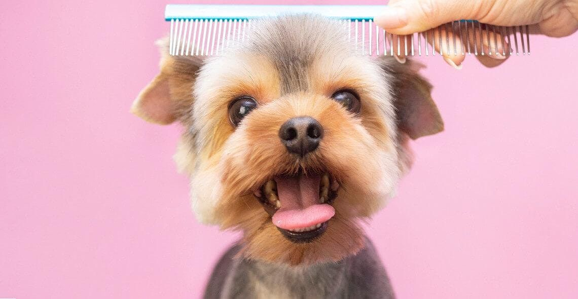 Dog Grooming Diploma Online Course | Online Event | AllEvents.in