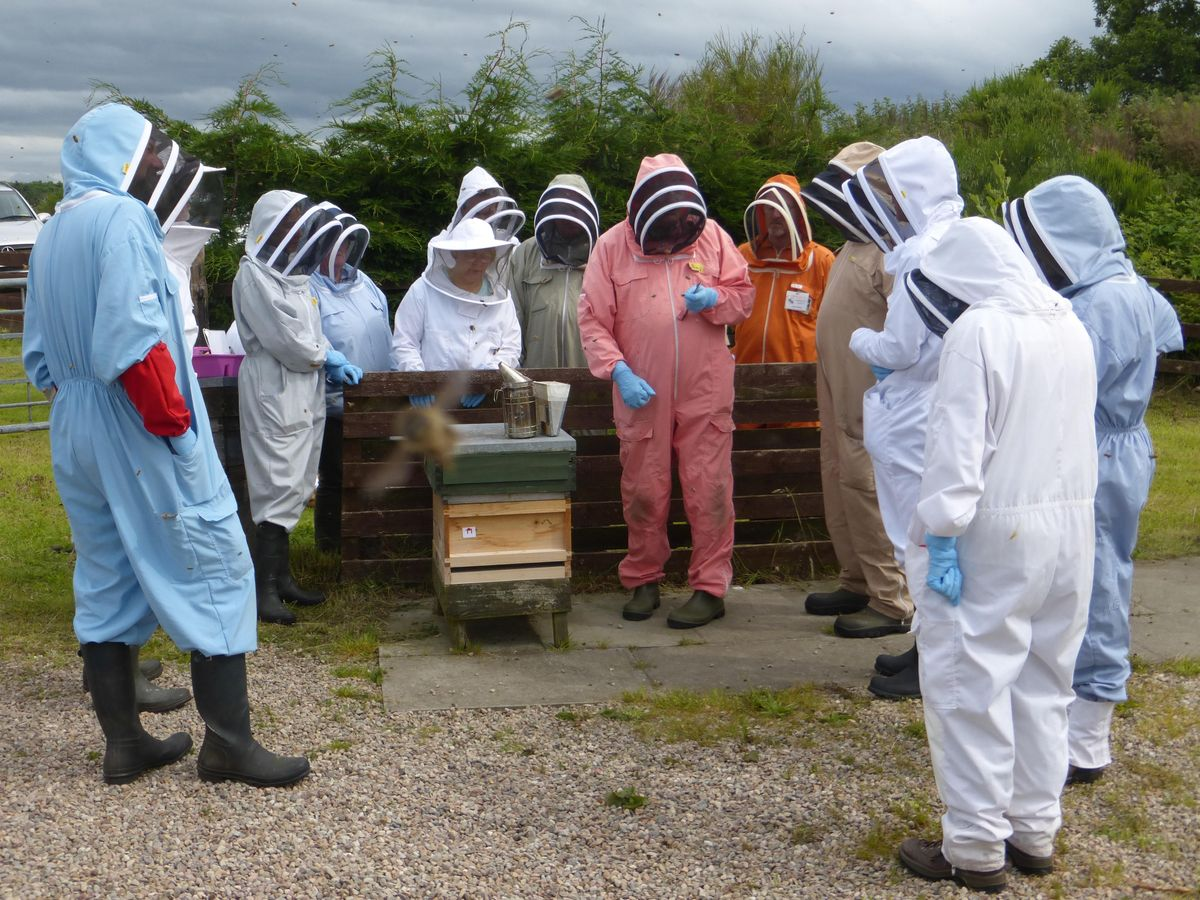 Introduction to Beekeeping course 7 June