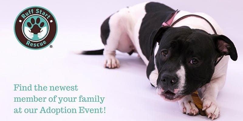 Duluth Petsmart adoption event