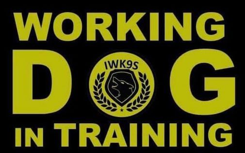 Working Dog Training Day, 28 November | Event in Genk | AllEvents.in