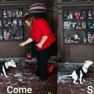 Basic Obedience Group Class for DEAF dogs