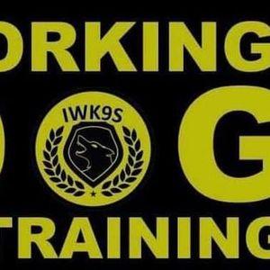 Working Dog Training Day
