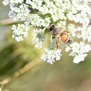 National Pollinator Week Scavenger Hunt