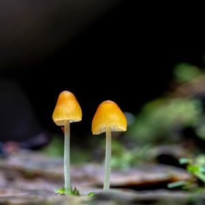 More than Mushrooms