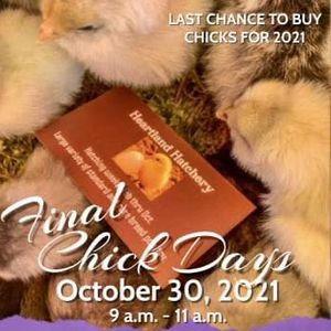 Chick Days at Van Buren