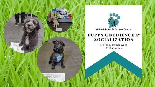 September Puppy Manners and Socialization