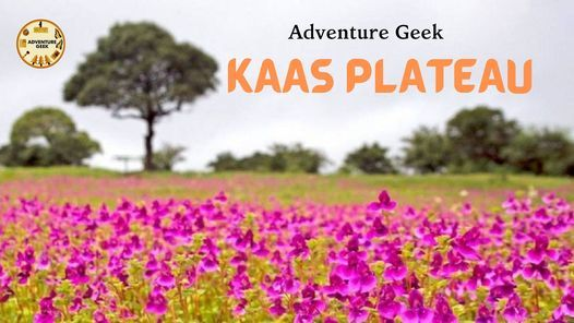 Kaas Plateau Tour   Event in Mumbai   AllEvents.in