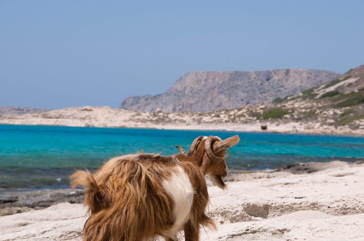 Crete Greek Island Group Travel Tour  - Taste of Crete