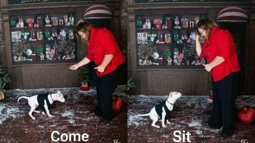 Basic Obedience Group Class for DEAF dogs, 15 May | Event in Galesburg | AllEvents.in