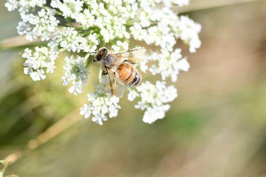 National Pollinator Week Scavenger Hunt, 22 June   Event in Monee   AllEvents.in