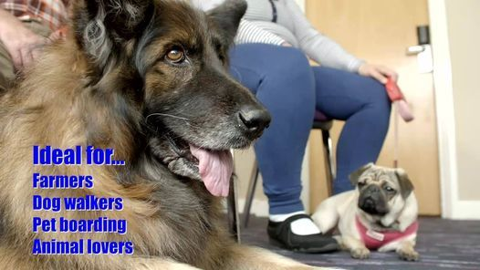 Canine First Aid Classroom Course, 1 November | Event in Bellshill | AllEvents.in