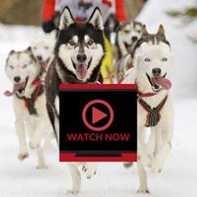 Dog Shows Online