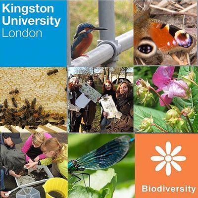 Kingston University Biodiversity Action Group