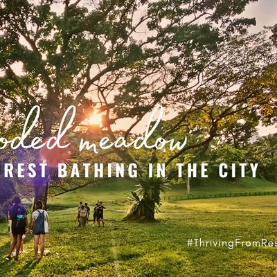 Nature and Forest Bathing in the City Wooded Meadow
