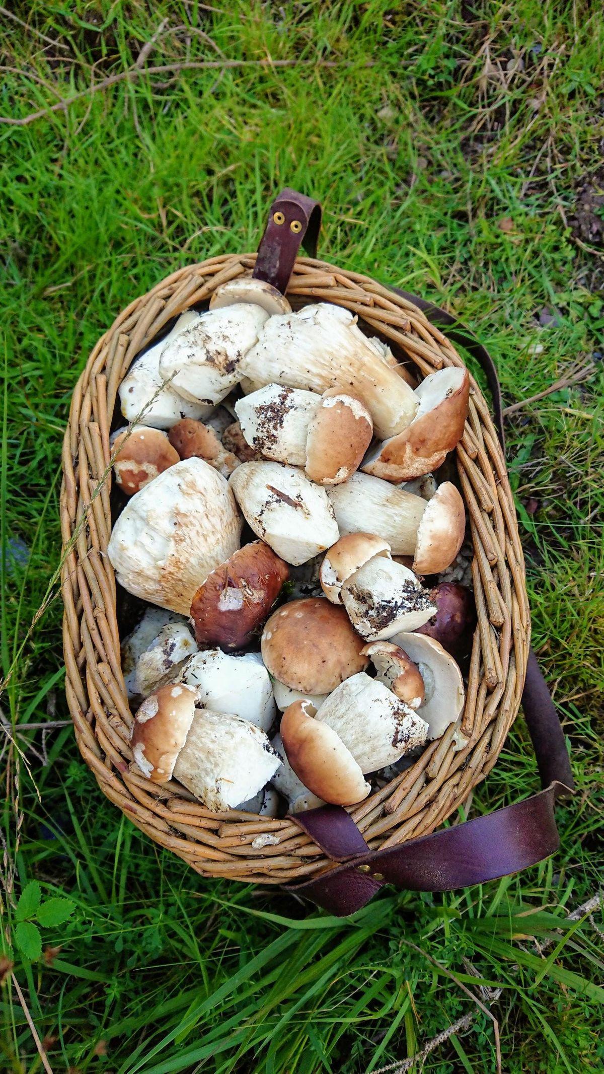 Ballyhoura Mountain Mushrooms Mushroom Forage on Sunday September 22nd