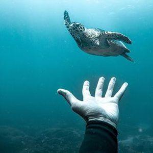 Ocean Film Festival Italia 2020 - Trieste