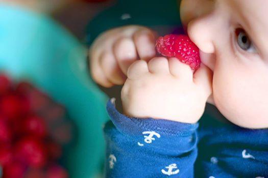 Breifrei Workshop  Baby-led weaning