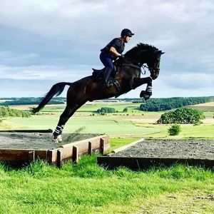 Showjumping schooling young horse training and unaffiliated classes