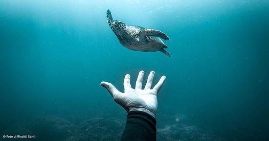 Ocean Film Festival Italia 2020 - Trieste, 18 January | Event in Grado | AllEvents.in