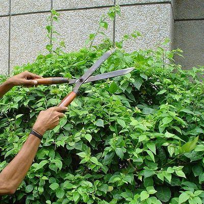 Pruning Solutions (webinar)