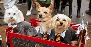 Paws for The Cause, Pet Parade and Howl-o-ween Costume Contest, 1 November | Event in Gloucester City | AllEvents.in