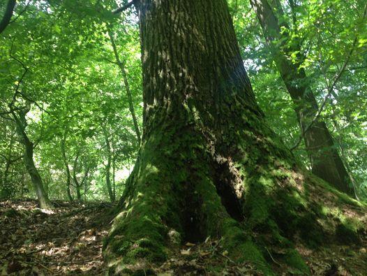 Waldfuhrung Das Geheime Leben Der Baume At Waldfuhlen Osnabruck