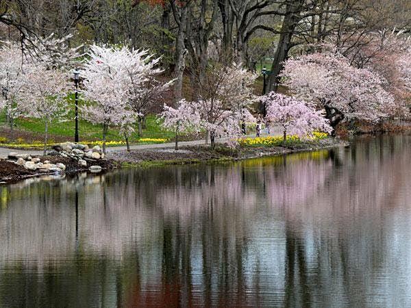 Branch Brook Park Birding Walk, 29 April | Event in Newark | AllEvents.in