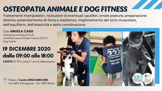Osteopatia Animale e Dog Fitness, 19 December | Event in Rome | AllEvents.in