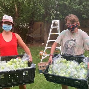 Gleaning opportunity at an heirloom apple orchard
