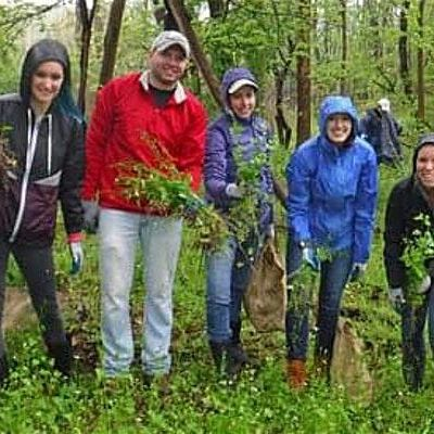 Invasive Plant Removal Drop In - October 14th