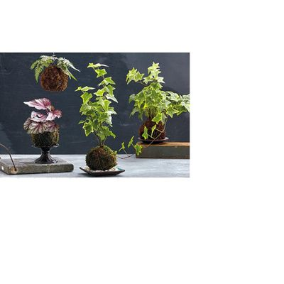 Kokedama (Moss Pots)