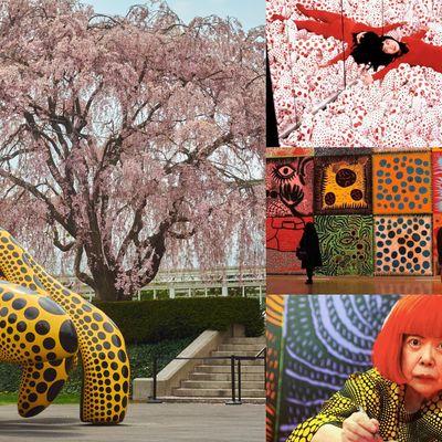 Yayoi Kusama The Life & Legacy of an Immersive Art Visionary Webinar