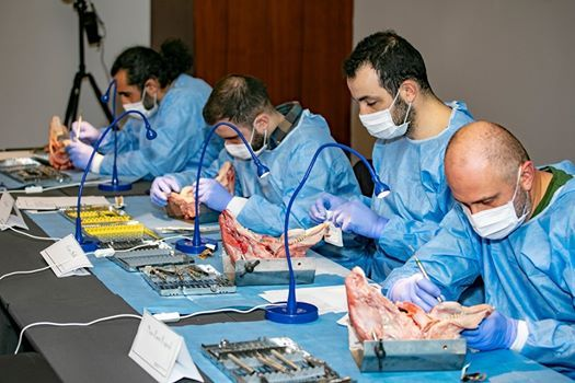 Surgical Training for Implant Placement  accommodation