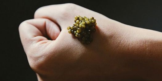 Guided Caviar Tasting | Event in Alexandria | AllEvents.in