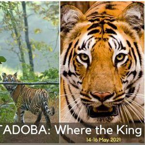 TADOBA Where the King Roams Free