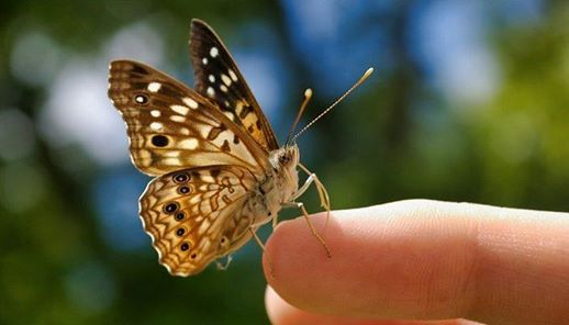 Annual Butterfly Release 2020