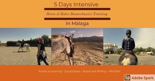 Horse & Rider Biomechanics Training in Malaga