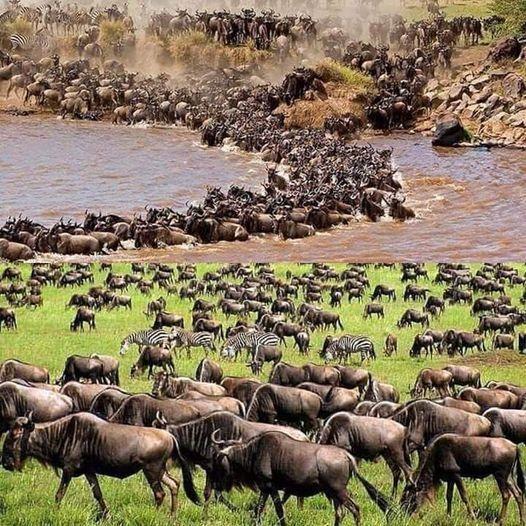 3 Days Masai Mara Wildebeest Migration, 30 July   Event in Nakuru   AllEvents.in