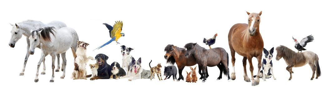 Animal Communication Course, 14 March   Online Event   AllEvents.in