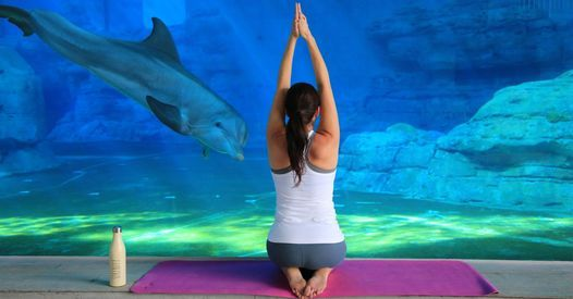 Dolphin Yoga Nidra, 7 November | Event in Clearwater | AllEvents.in