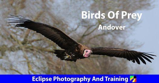 Birds Of Prey, 7 October | Event in Andover | AllEvents.in