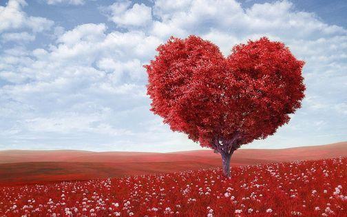 Leef vanuit je hart! Let op datum is gewijzigd!!, 2 November | Event in Drachten | AllEvents.in