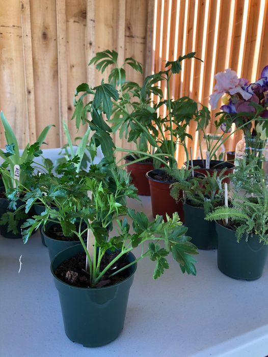 Blue Ridge Plant & Seed Swap | Event in Ferrum | AllEvents.in