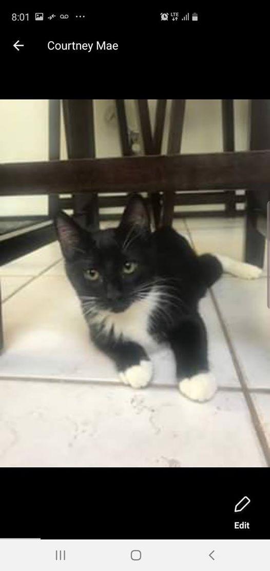 Ak Krazy Kats Furry Friend Adoptions at PetSmart, Anchorage