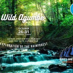 Wild Agumbe Rainforest exploration