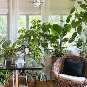 Create an Indoor Jungle with Houseplants