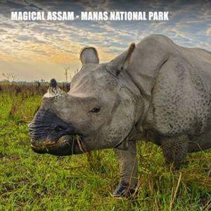 Magical Assam Manas National Park - November 2020